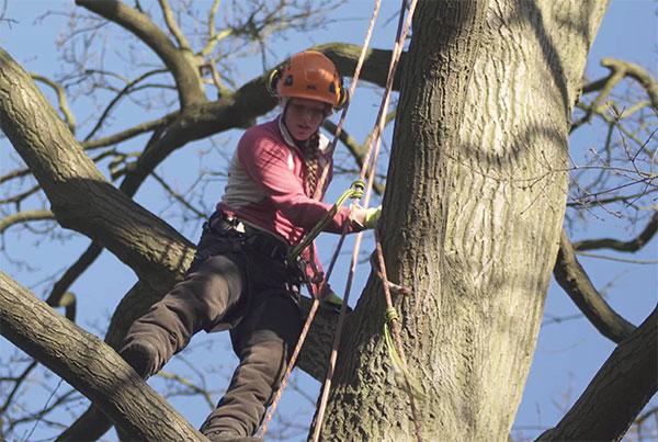 Riseholme College Arboriculture